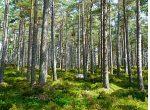 Umweltausschuss des EU-Parlaments legt seine Position zur LULUCF fest