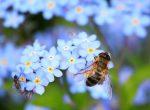 Biene bestäubt Blumen