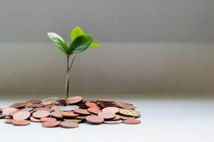 Geldmünzen mit grüner Pflanze