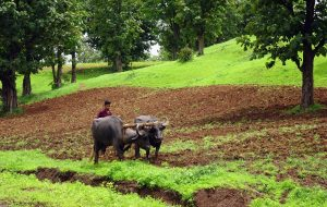 Indischer Bauer pflügt Feld